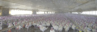 cropped-turkey-farm.jpg