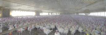 cropped-turkey-farm.jpg
